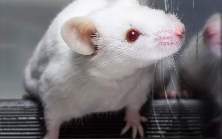 A mouse study links depression seizures.